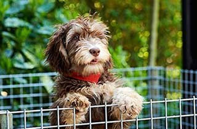 Milou de hond